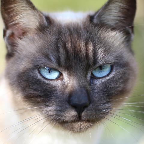 「警戒する綺麗な目の猫」LINEアイコン プロフィール
